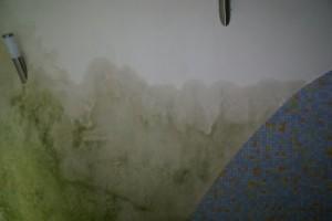 algengroei_op_muur